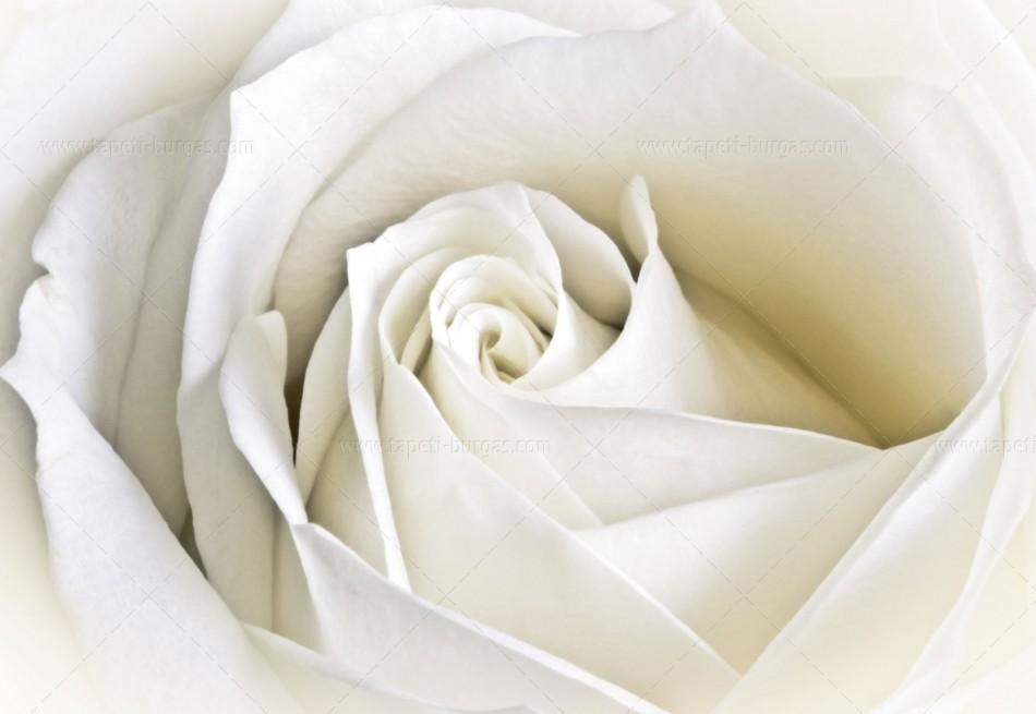Фототапет на флис основа Роза бяла